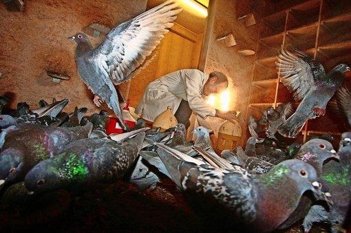 Friede den Tauben