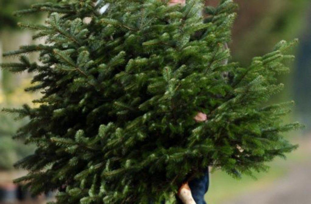 weihnachtsbaum zucker im wasser h lt die tanne gr n. Black Bedroom Furniture Sets. Home Design Ideas