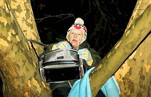 86-jähriger Platanenhocker im Stadtpark Foto: dapd